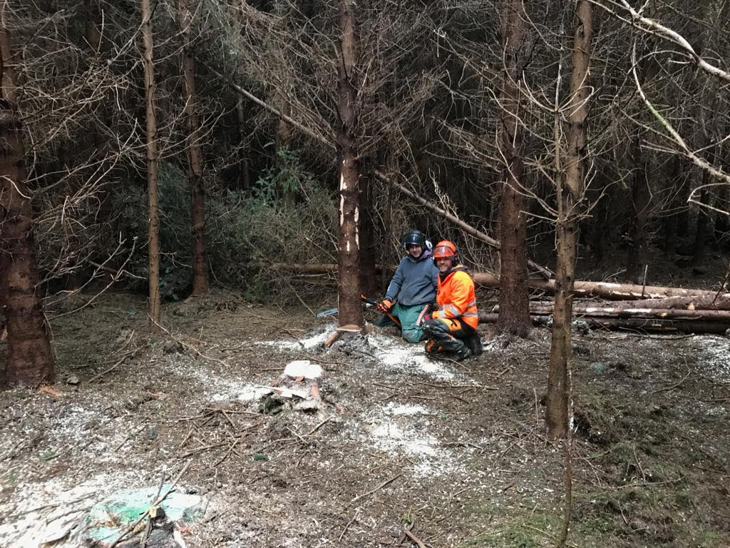 picture of chainsaw felling course