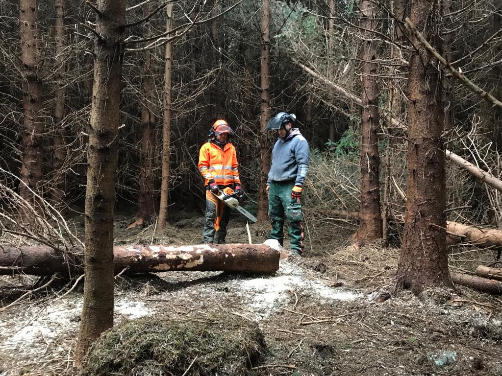 picture of tree surgeons looking at felled tree